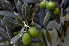 растения 108