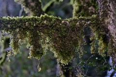 растения 166