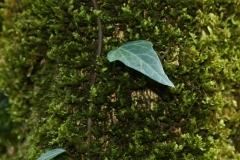 растения 126