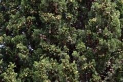 растения 105