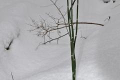 растения 91