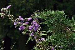 растения 100