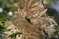 растения 84