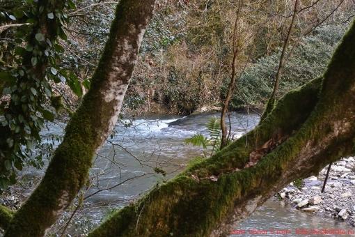 река Хоста 034