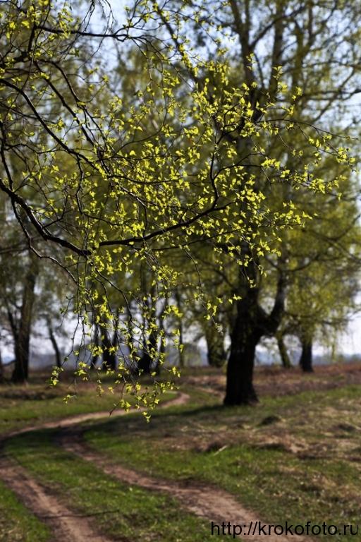 весенние пейзажи 42