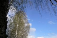 весенние пейзажи 4