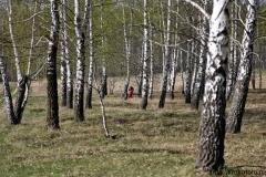весенние пейзажи 43