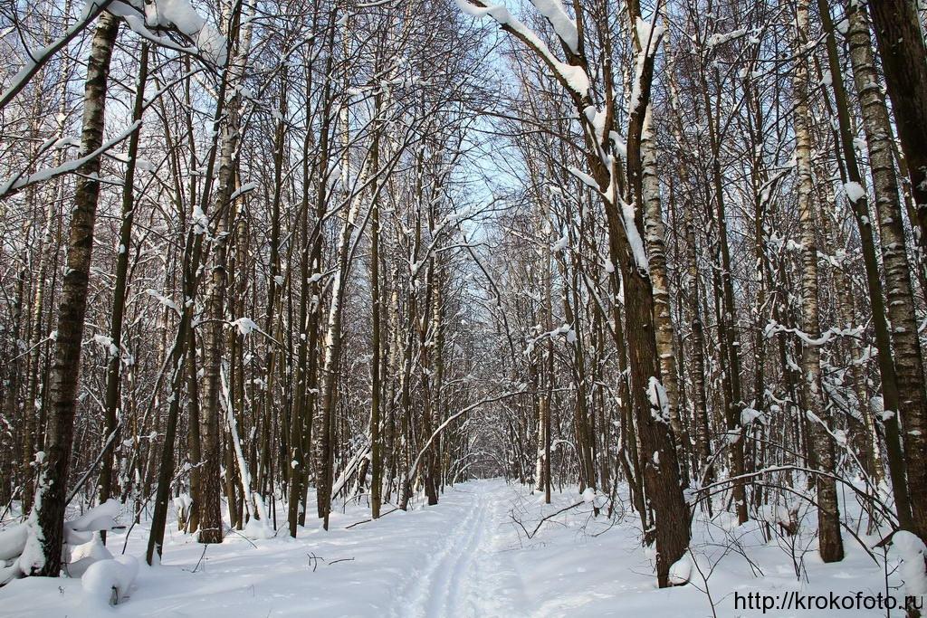зимние пейзажи 6