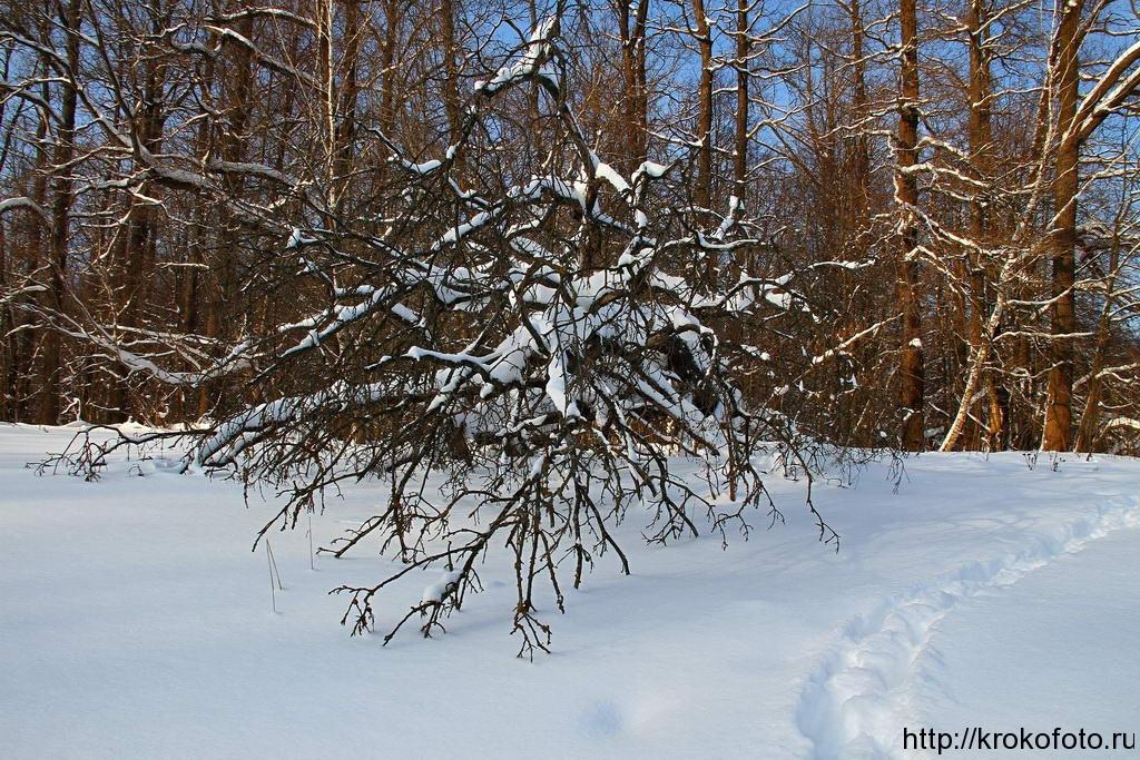 зимние пейзажи 13