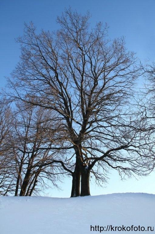 зимние пейзажи 17