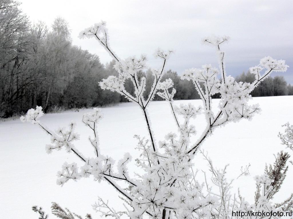 зимние пейзажи 26