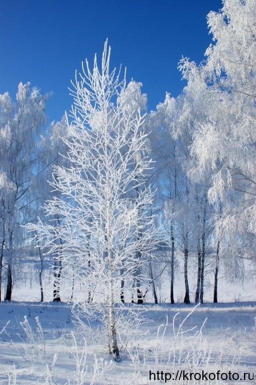 зимние пейзажи 43
