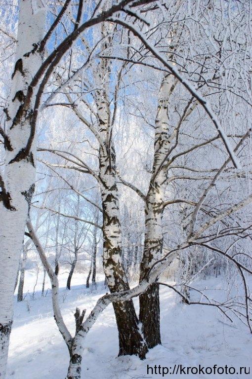 зимние пейзажи 45