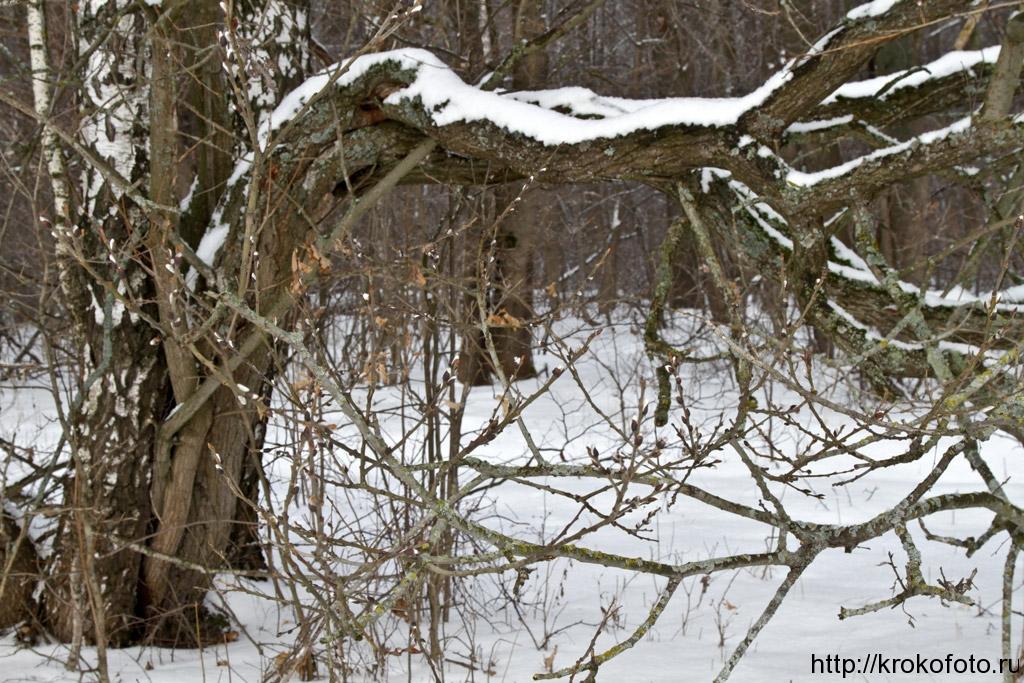 зимние пейзажи 74