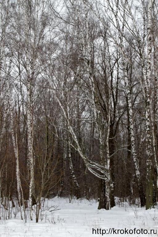 зимние пейзажи 75