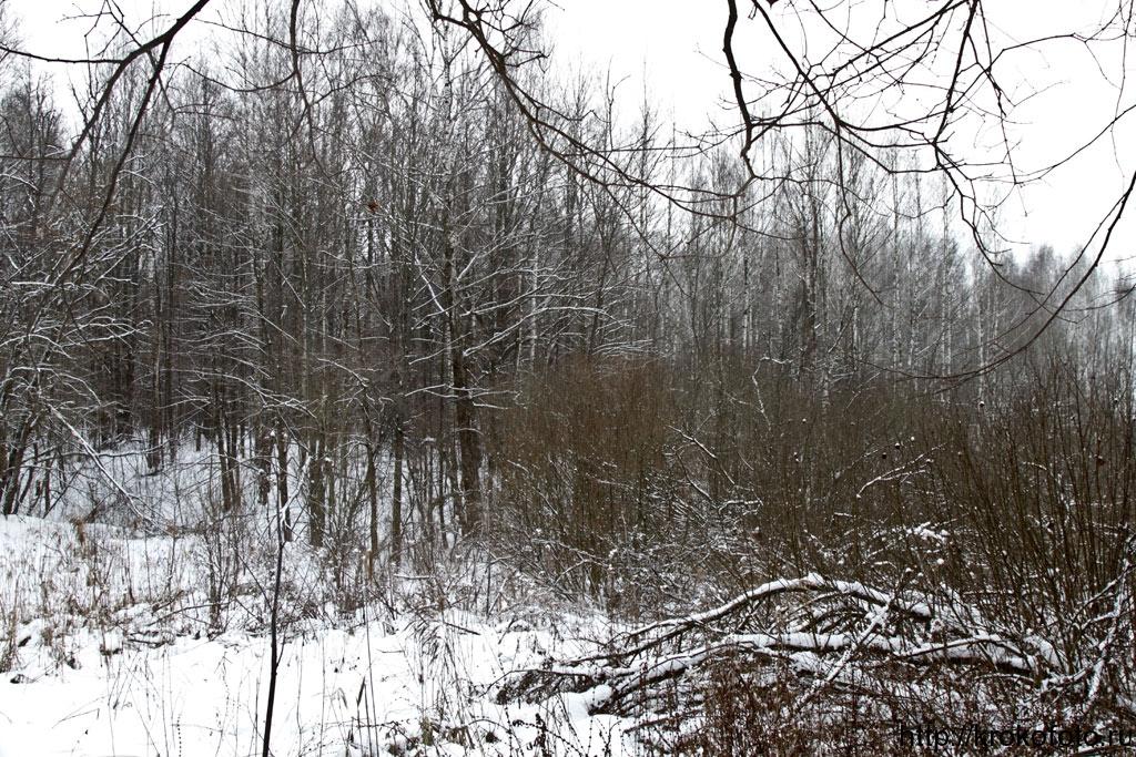 зимние пейзажи 76