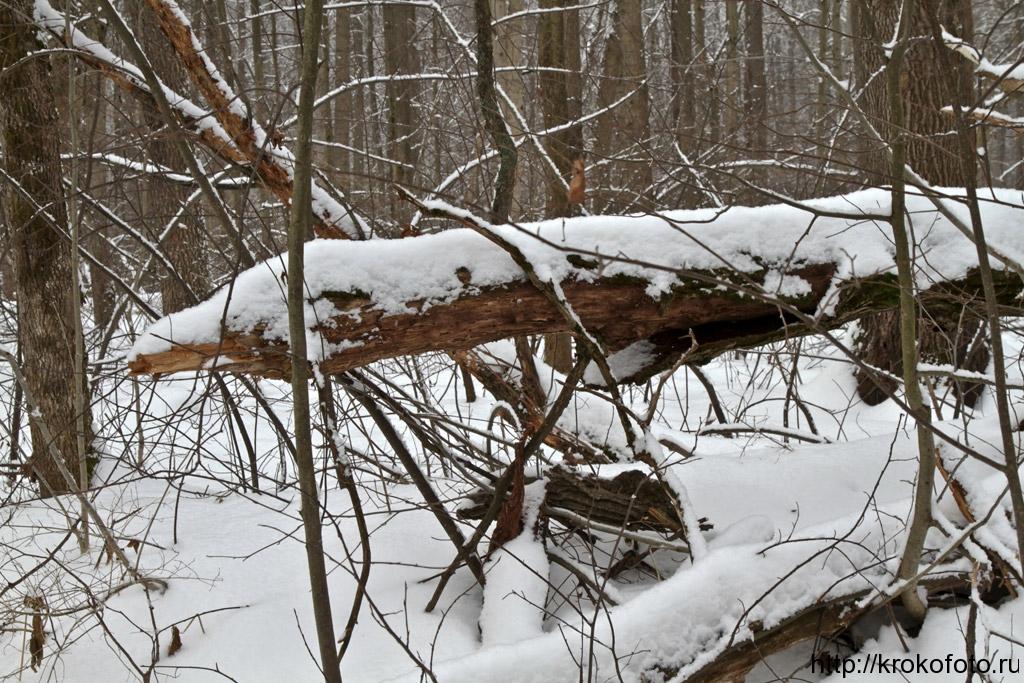 зимние пейзажи 77