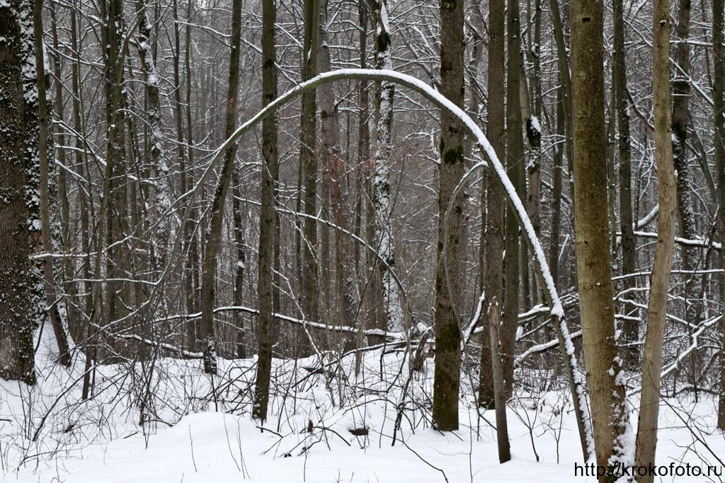 зимние пейзажи 78