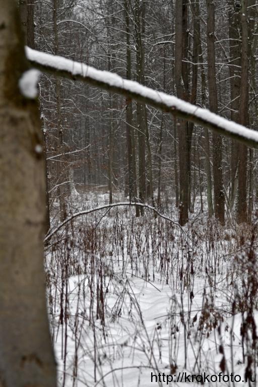 зимние пейзажи 82