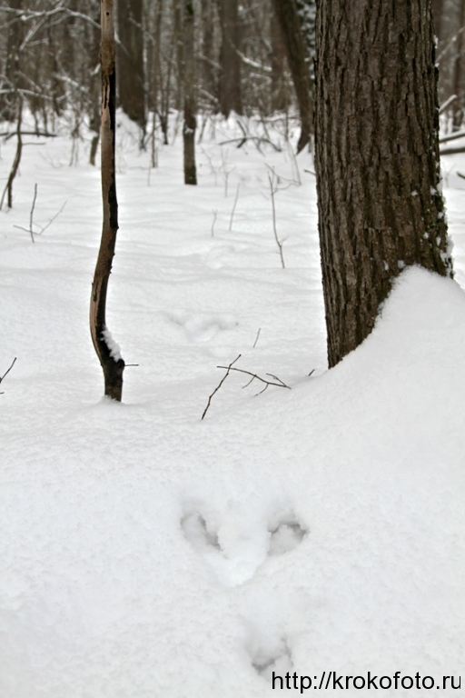 зимние пейзажи 84