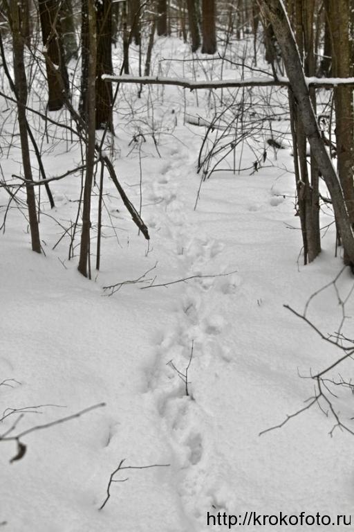 зимние пейзажи 86