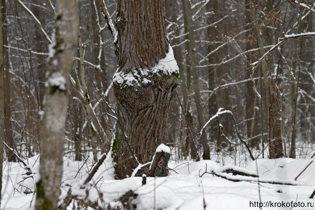 зимние пейзажи 87