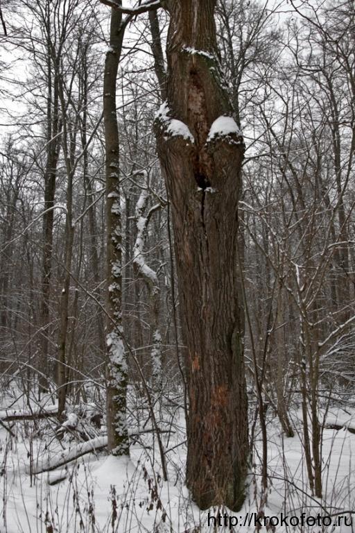 зимние пейзажи 89