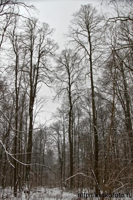 зимние пейзажи 90