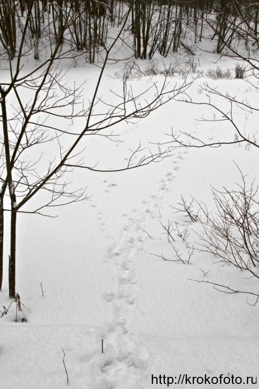 зимние пейзажи 91
