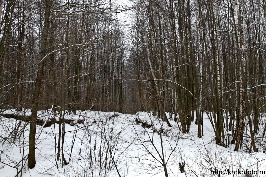 зимние пейзажи 92