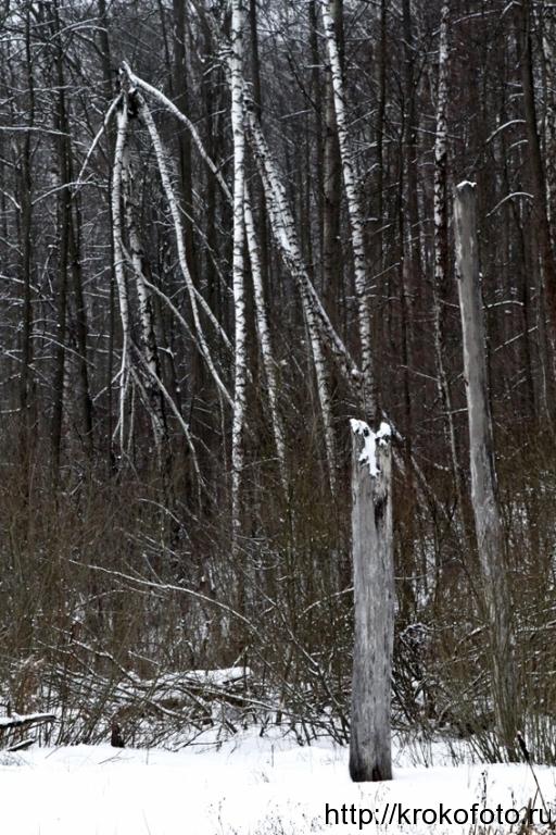 зимние пейзажи 95