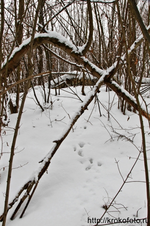 зимние пейзажи 102