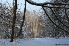 зимние пейзажи 7