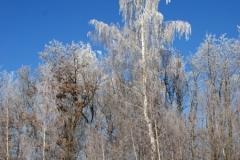 зимние пейзажи 33