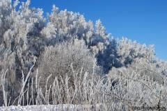 зимние пейзажи 37
