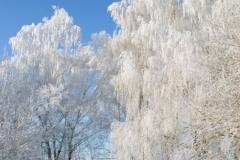 зимние пейзажи 40