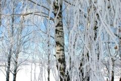зимние пейзажи 44