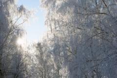 зимние пейзажи 50