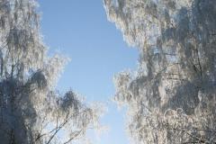 зимние пейзажи 51