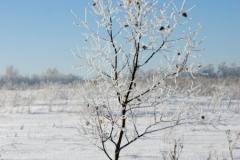 зимние пейзажи 54