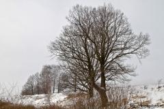 зимние пейзажи 69