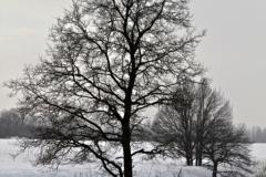 зимние пейзажи 71