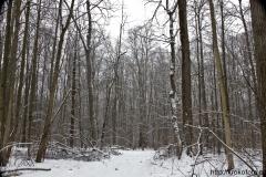 зимние пейзажи 79