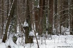 зимние пейзажи 80