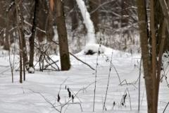 зимние пейзажи 83