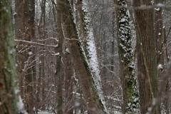 зимние пейзажи 85