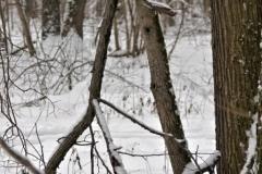 зимние пейзажи 88