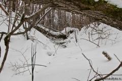 зимние пейзажи 99