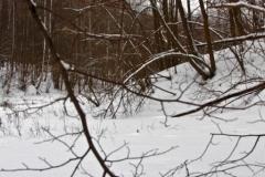 зимние пейзажи 100