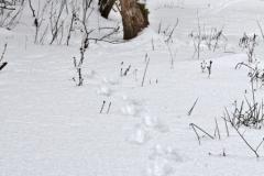 зимние пейзажи 103